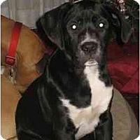 Adopt A Pet :: Oreilly - Thomasville, GA
