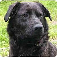 Adopt A Pet :: Macie - Mocksville, NC