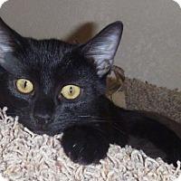 Adopt A Pet :: Kegan - Fountain Hills, AZ