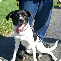 Adopt A Pet :: Mishka - Lancaster, OH