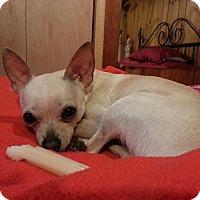 Adopt A Pet :: Ritchie - Chicago, IL