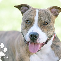 Adopt A Pet :: Joey (Courtesy Listing) - La Habra, CA