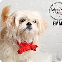 Adopt A Pet :: Emma - Omaha, NE