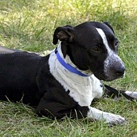 Pointer Mix Dog for adoption in Lorain, Ohio - Ava