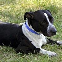 Adopt A Pet :: Ava - Lorain, OH