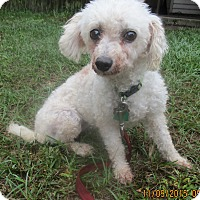 Adopt A Pet :: Princess - Orange Park, FL