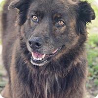 Adopt A Pet :: Blackie - Wellington, FL