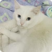 Adopt A Pet :: Patrick - Medina, OH