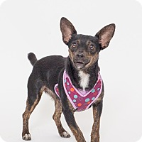 Adopt A Pet :: Mary - Jupiter, FL