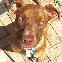 Adopt A Pet :: Nala - Los Angeles, CA