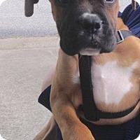 Adopt A Pet :: Alpha - Alpharetta, GA