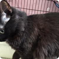 Adopt A Pet :: OakLuna 2chips - Diamond Springs, CA