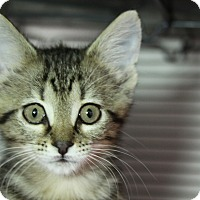 Adopt A Pet :: Nairobi - Sarasota, FL