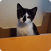 Adopt A Pet :: Hugo - Colmar, PA