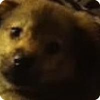 Adopt A Pet :: Angel - Saddle Brook, NJ