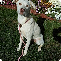 Adopt A Pet :: Lizzy - New Oxford, PA