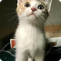 Adopt A Pet :: Emmy - Wantagh, NY