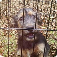 Adopt A Pet :: Hopper - Mobile, AL
