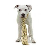 Adopt A Pet :: *MILKSHAKE - Orlando, FL