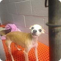 Adopt A Pet :: Butch - Newport, KY