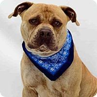 Adopt A Pet :: *JADEN - Orlando, FL
