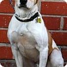 Adopt A Pet :: Huxley