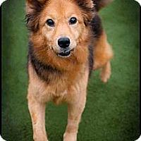 Adopt A Pet :: Tilly - Houston, TX