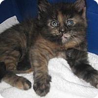 Adopt A Pet :: Alambil - Dallas, TX