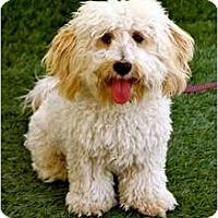 Adopt A Pet :: Auggie - Mission Viejo, CA
