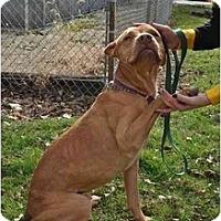 Adopt A Pet :: Chico - Chicago, IL