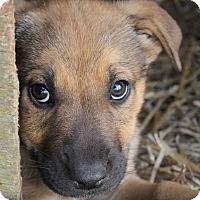 Adopt A Pet :: Roma - Marietta, GA