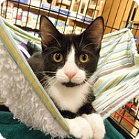 Adopt A Pet :: Bonbon and Fudge - Watkinsville, GA