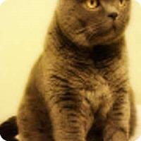 Adopt A Pet :: Rooney - Davis, CA