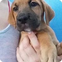 Adopt A Pet :: Deanna - Gainesville, FL
