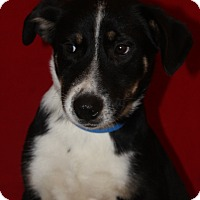 Adopt A Pet :: Linc - Waldorf, MD