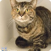 Adopt A Pet :: Clawdia - Merrifield, VA