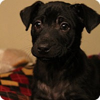 Adopt A Pet :: Berklee - Sudbury, MA