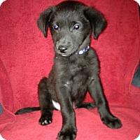 Adopt A Pet :: Elvis - Hillsboro, IL