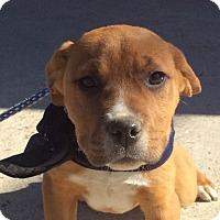 Adopt A Pet :: Violet (HAS BEEN ADOPTED) - Rochester, NY