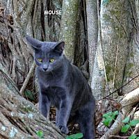 Adopt A Pet :: Mouse - Bonita Springs, FL