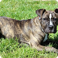 Adopt A Pet :: Rosemary aka Rosie - Waldorf, MD