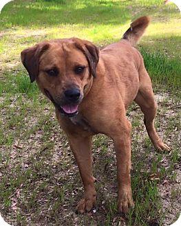 Retriever (Unknown Type) Mix Dog for adoption in Macon, Georgia - Trix