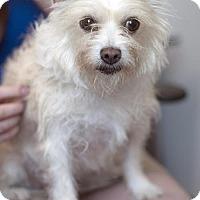 Adopt A Pet :: Enid - San Diego, CA