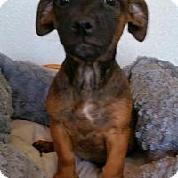 Adopt A Pet :: Jackie - Yucaipa, CA