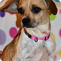 Adopt A Pet :: Cici - Albemarle, NC