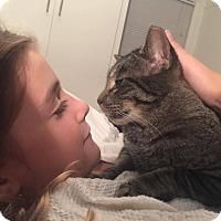 Adopt A Pet :: Bob - Chicago, IL