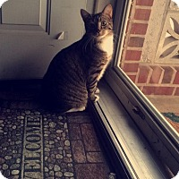 Adopt A Pet :: Chubbs (COURTESY POST) - Baltimore, MD