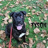Adopt A Pet :: Tyson - Melbourne, KY