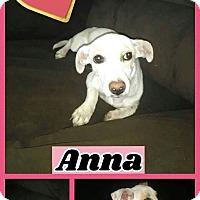 Adopt A Pet :: Anna - Lacey, WA