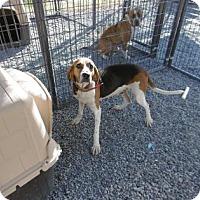 Adopt A Pet :: Foxy - Barco, NC